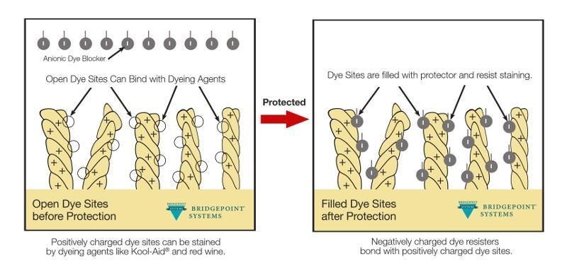 Carpet Dye Site Diagram for Carpet Protector