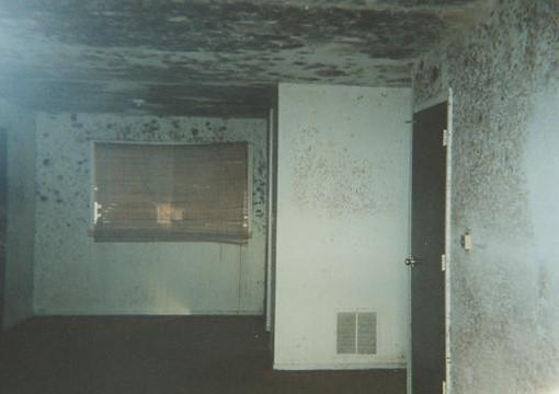 Moldy Apartment