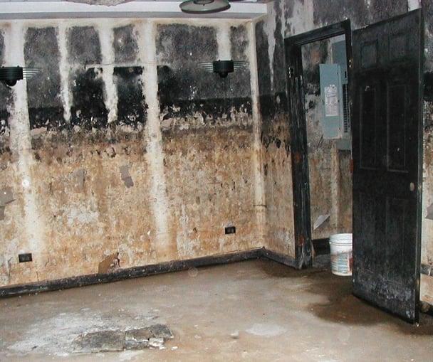 Moldy Chicago House