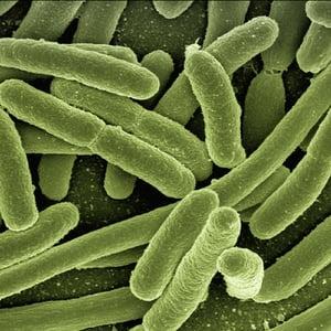 bacteria-1